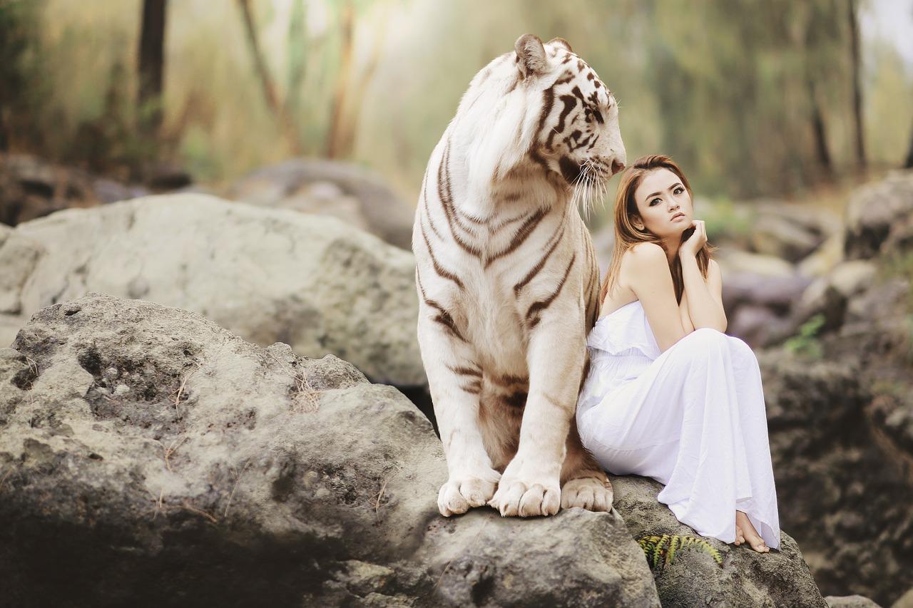 tiger affiliation